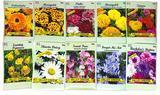 Black Duck Brand Set of 50 Flower Seed Packets